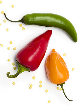 theme-peppers-9.png