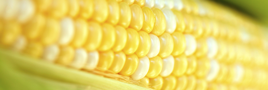 theme-wide-corn-1.png